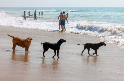 Acapulco destino Pet Friendly